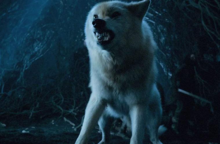Призрак - волк Джона Сноу